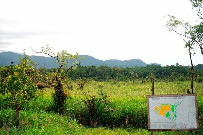 faz-desmatada-na planicie costeira do Paraná,APA E ESEC de Guaraqueçaba