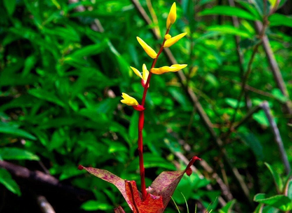 RPPN Salto Morato, Reserva Particular do Patrimônio Natural Salto Morato, imagem de flor-mata-atlântica