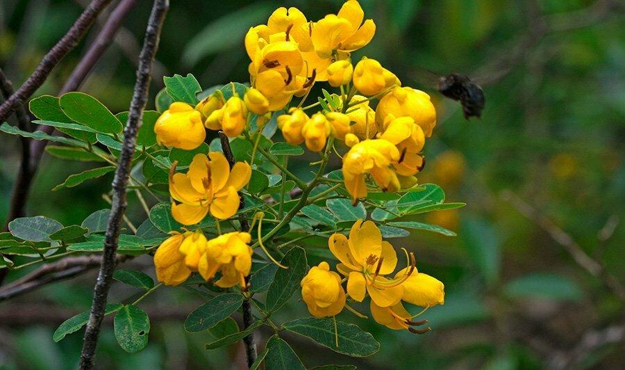 APA e ESEC de Guaraqueçaba,flores-amarelas-e-mamangava-
