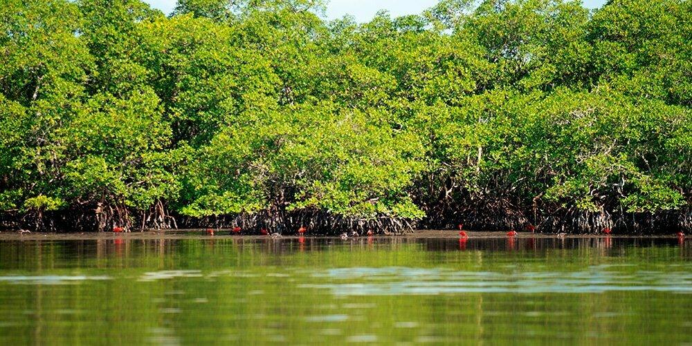 guaras-na mata atlântica-APA E ESEC de Guaraqueçaba