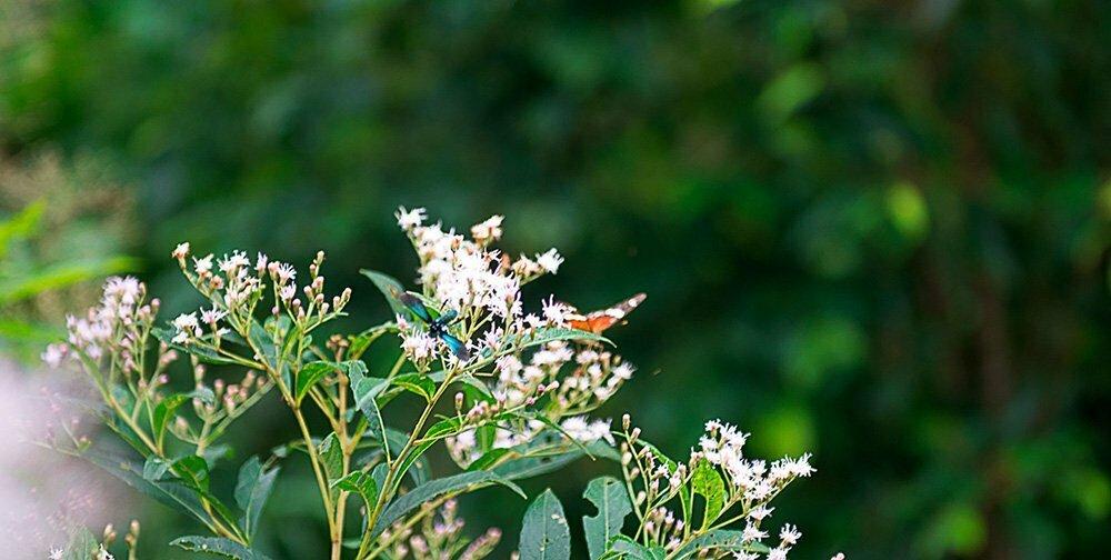 RPPN Salto Morato, Reserva Particular do Patrimônio Natural Salto Morato, imagem de inseto-azul-a-