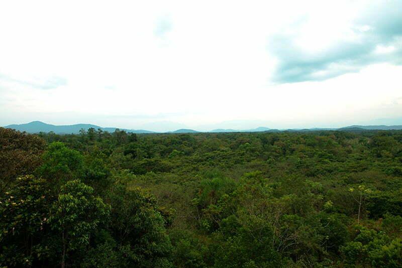 reflorestamento-da-RN-cacheira- na APA e ESEC de Guaraqueçaba