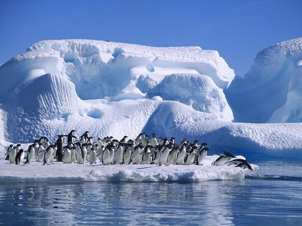 Código Polar , imagem de iceberg com pinguins
