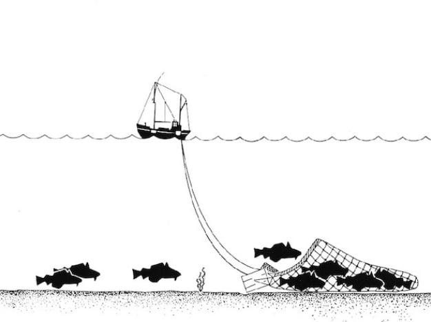 Portugal proíbe pesca de arrasto., ilustração de pesca de arrasto