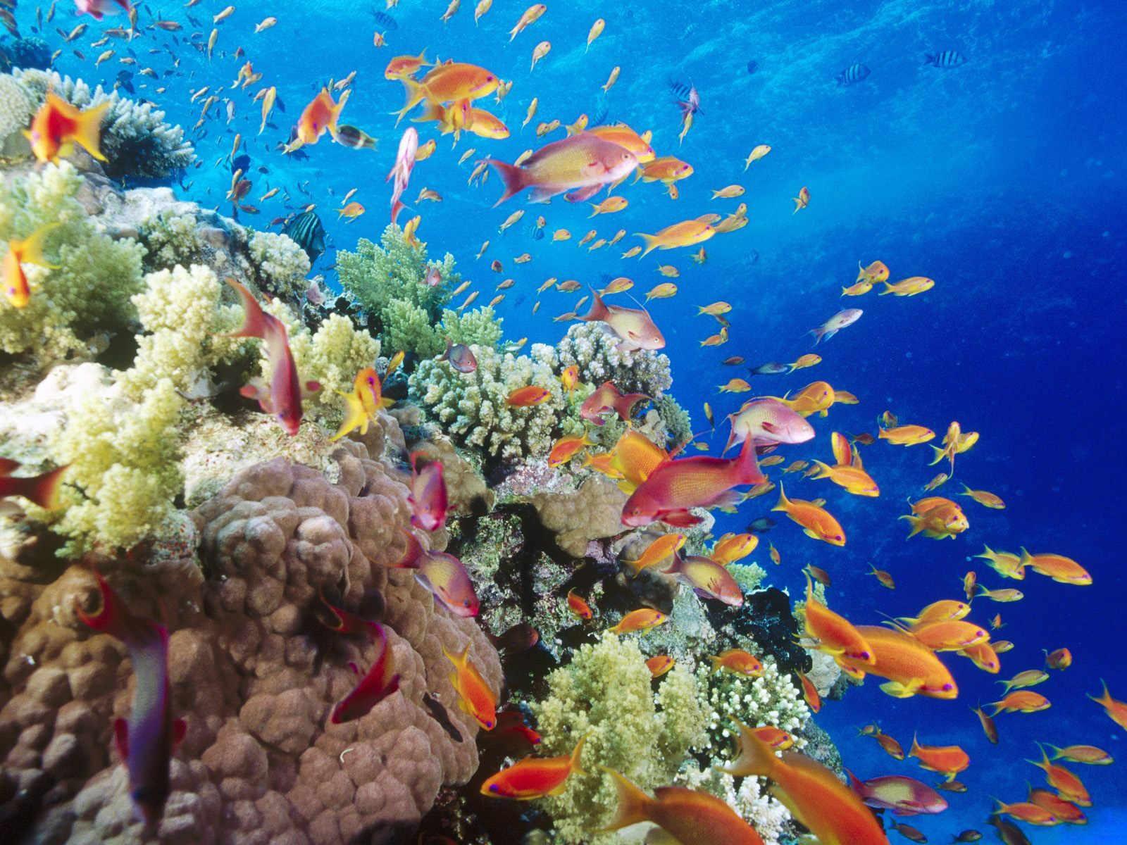 imagem arrecife mesoamericano