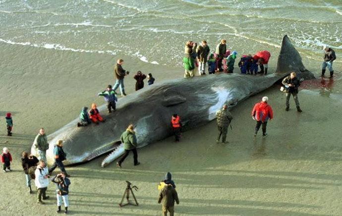 imagem baleia morta por ingerir plástico
