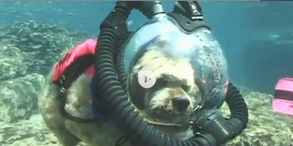 imagem cão mergulhador