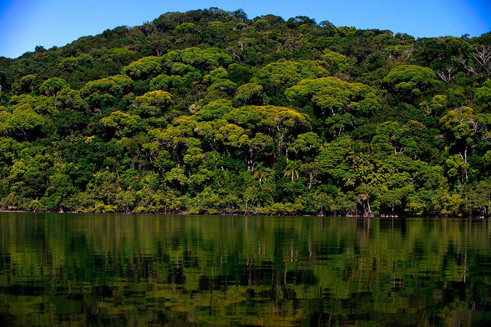 imagem da-mata-atlantica Parque Nacional do Superagui, Paraná
