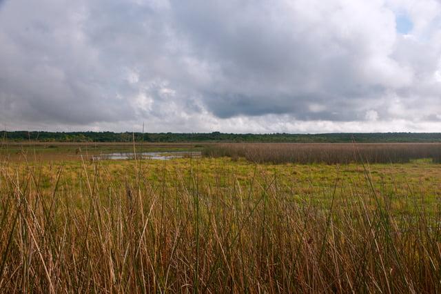 Projeto de Lei ameaça Unidades de Conservação brasileiras, imagem de banhado- parque nacional da lagoa do peixe
