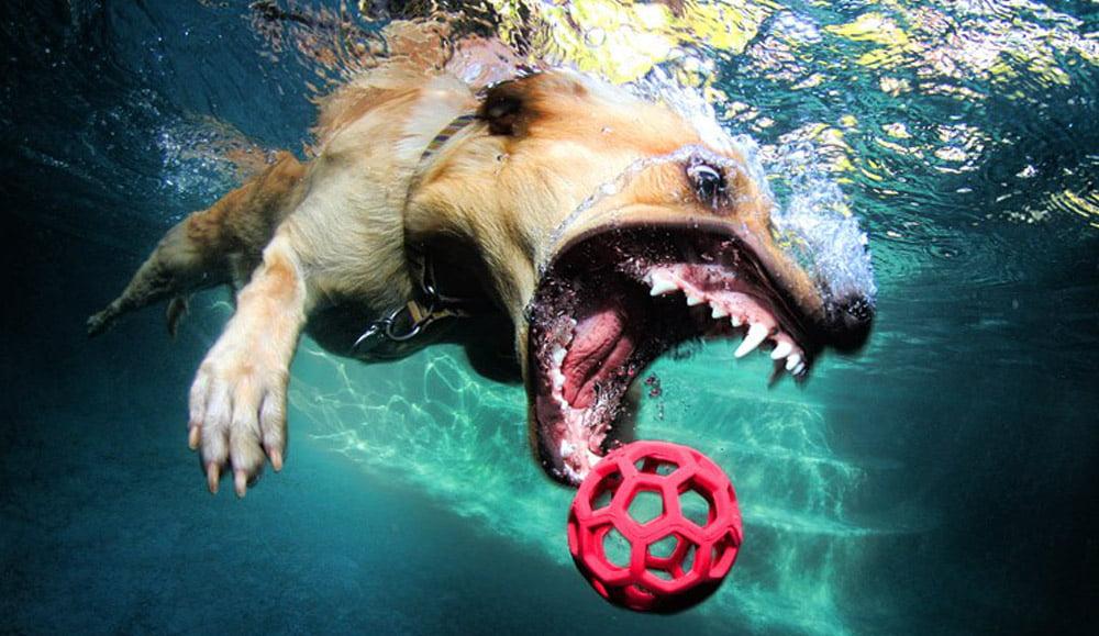 Cães mergulhadores com equipamento Scuba, imagem cão mergulhador