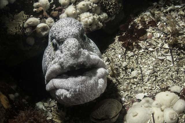 Selfies de animais marinhos, imagem selfie moréia