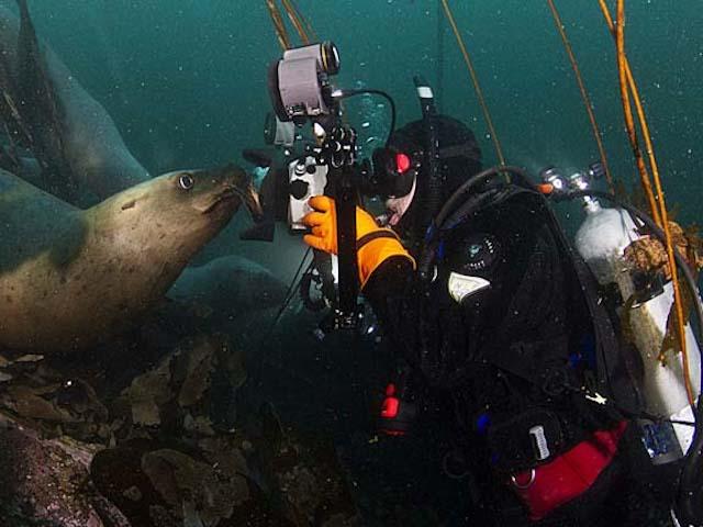 Selfies de animais marinhos, imagem Richard Salas