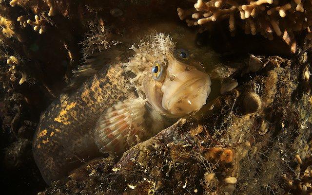 Selfies de animais marinhos, imagem selfie peixe