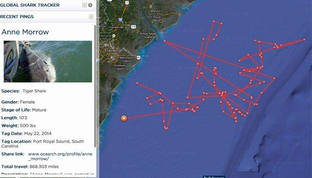 , imagem de mapa com tTubarões monitorados por satélite