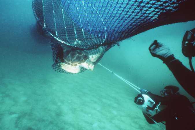 imagem tartaruga na rede de pesca