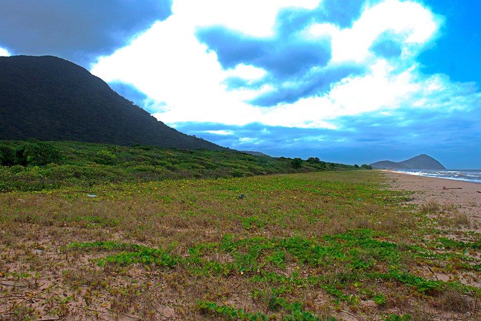 Arie Ilha do Ameixal e Mosaico Juréia- Itatins, imagem de restinga-rio verde,Mosaico Juréia- Itatins.