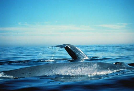 imagem baleia azul