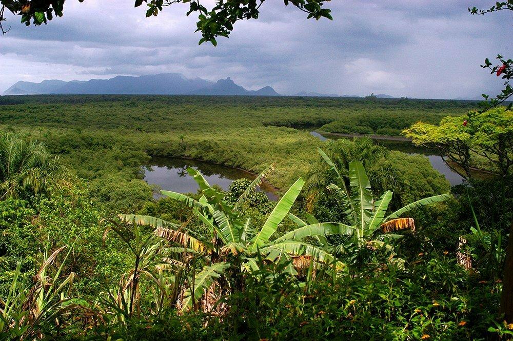Arie Ilha do Ameixal e Mosaico Juréia- Itatins, imagem de manguezal-juréia- e ilha ameixal-Mosaico Juréia- Itatins.