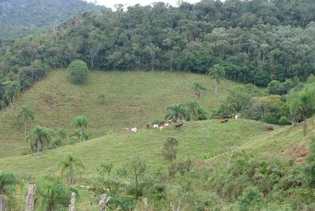 imagem vegetação nativa