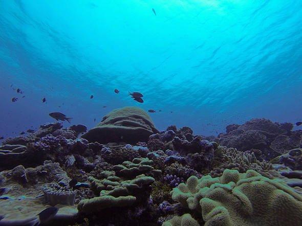 imagem maior santuário marinho do mundo
