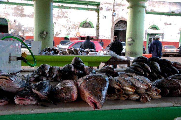 Recursos marinhos vivos: pesca, imagem de peixaria