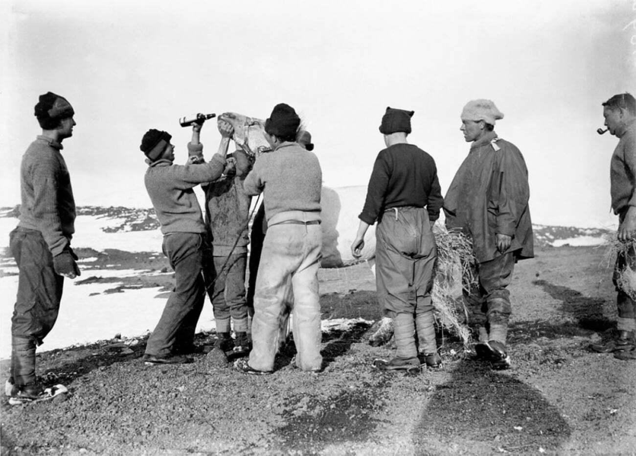 imagem de membros da expedição Terra Nova e um pônei na Antártica