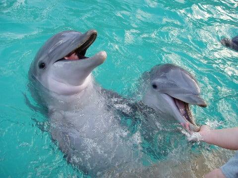 imagem golfinhos em cativeiro