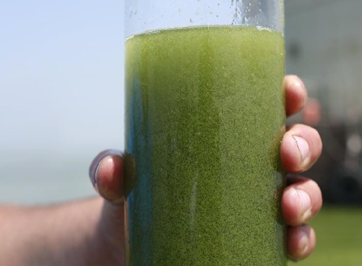 Lago tem água totalmente verde, imagem de copo com água contaminada
