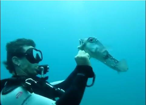 mergulhador liberta baiacu de anzol