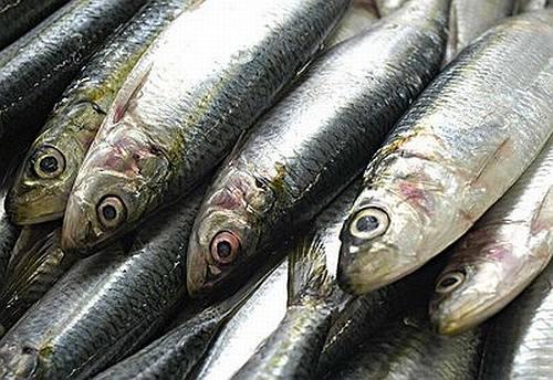 sardinha-verdadeira