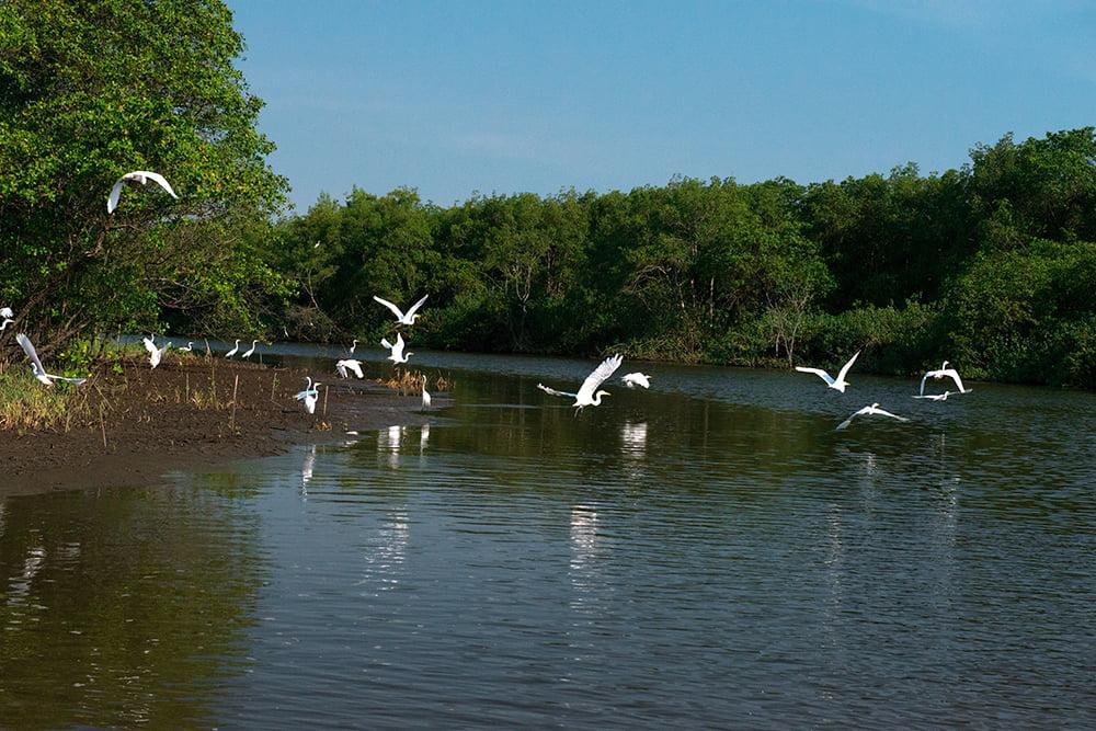 APA Guapimirim / ESEC da Guanabara, imagem de -garças-brancas-