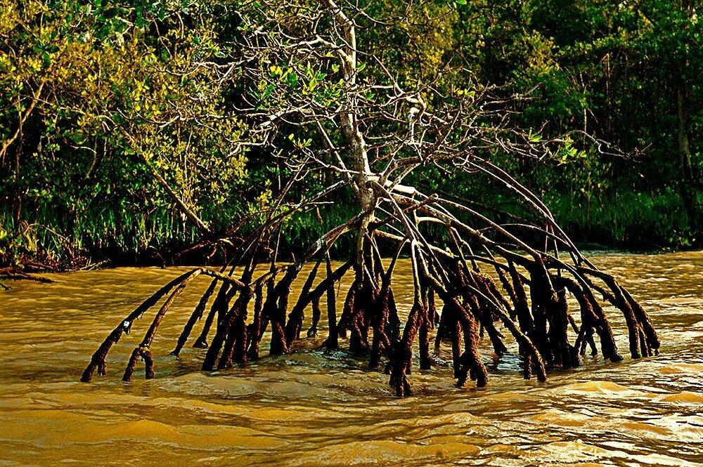 Unidades de Conservação de Florianópolis, imagem de mangue