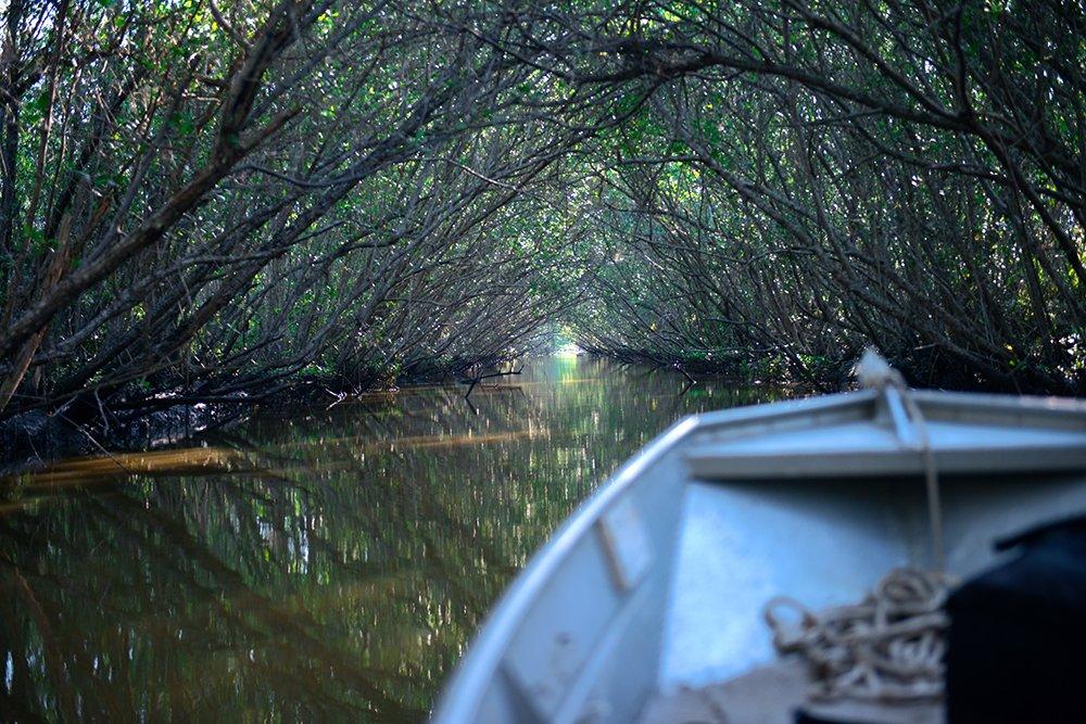 APA Guapi-mirim / ESEC da Guanabara, imagem do-mangue-Apa Guapi-mirim ESEC da Guanabara
