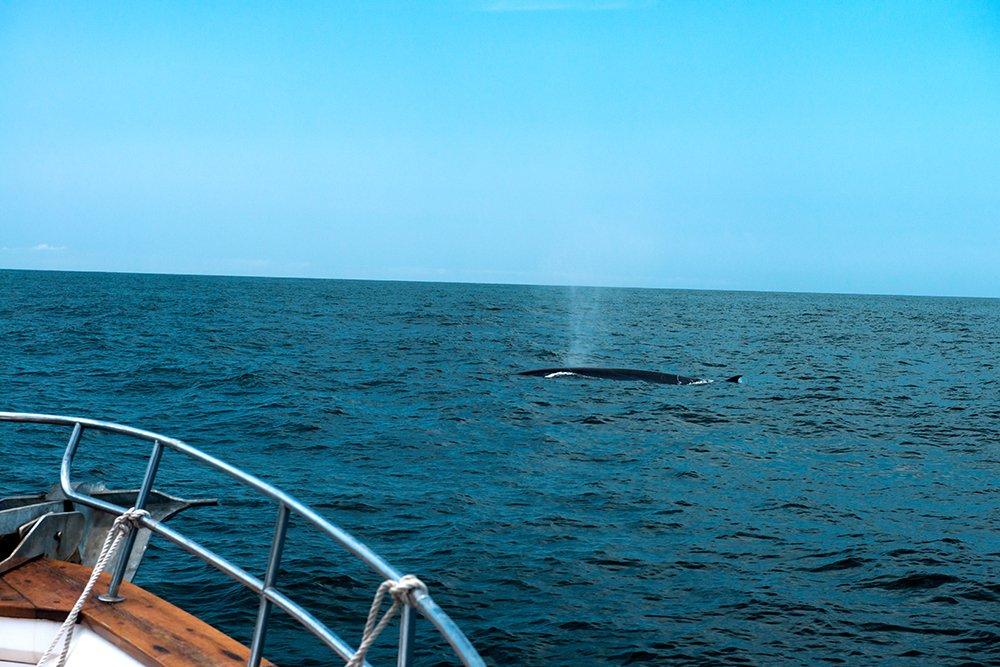 uma-baleia-e-msf