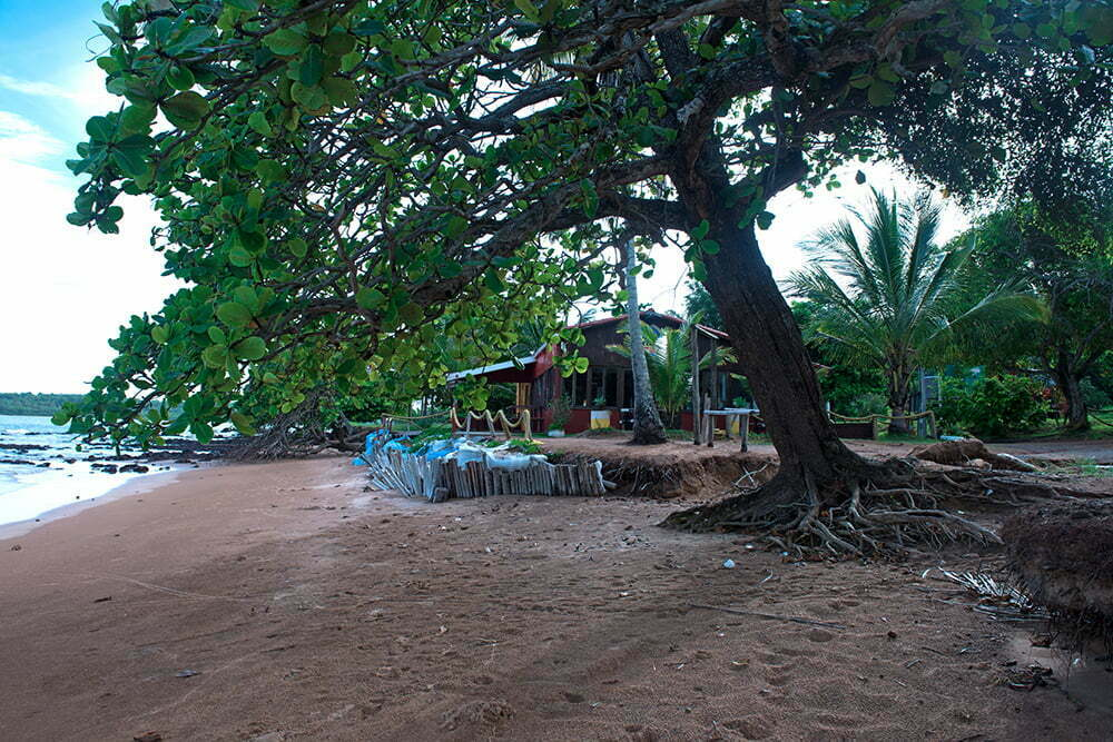 Reserva Biológica dos Comboios e APA Costa das Algas, imagem da-castanheira-na APA COSTA DAS ALGAS