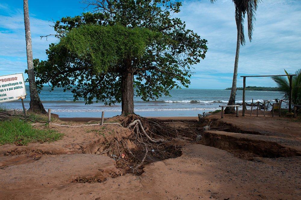 Reserva Biológica dos Comboios e APA Costa das Algas, imagem da-castanheira na APA COSTA DAS ALGAS