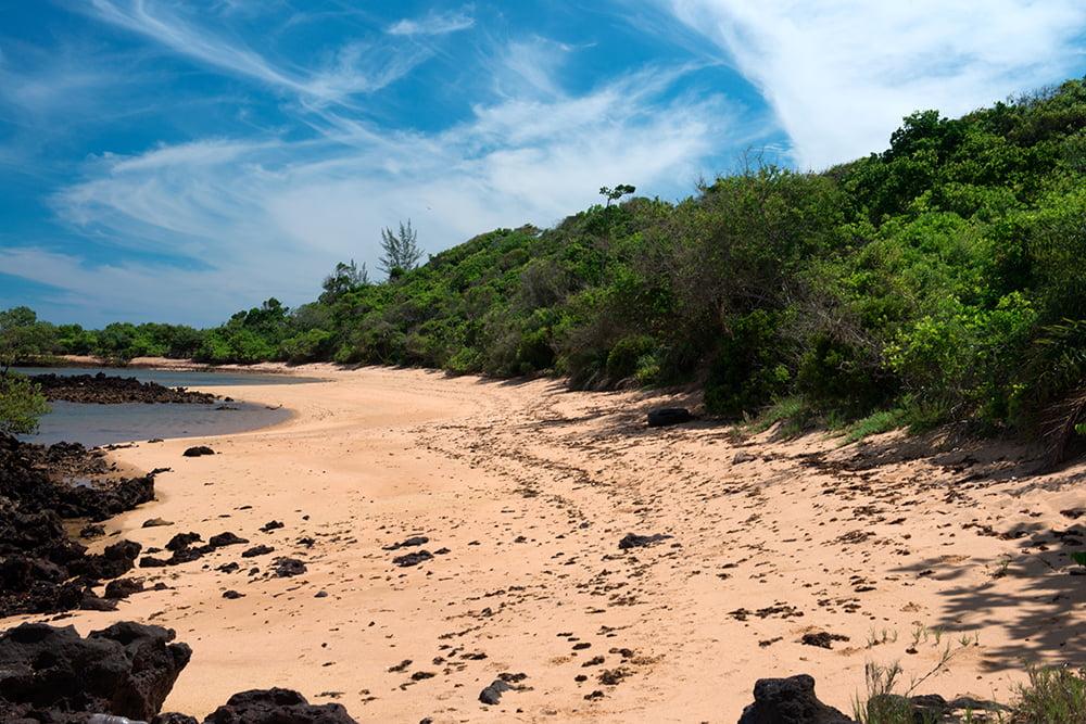Reserva Biológica dos Comboios e APA Costa das Algas, imagem da-restinga na APA COSTA DAS ALGAS