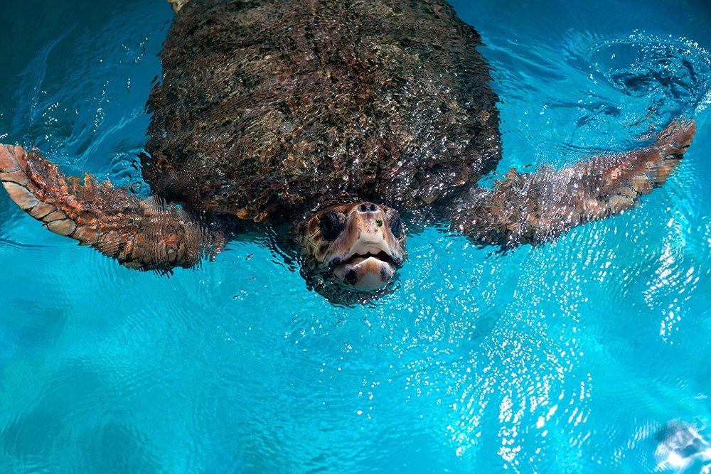 Reserva Biológica dos Comboios e APA Costa das Algas, imagem de a-tartaruga-na Reserva Biológica dos Comboios