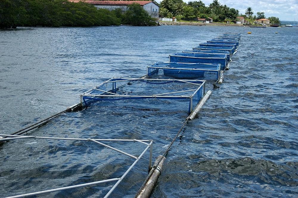 Criação de peixes em cativeiro, imagem de gaiolas-de-criação-de-tilápias-na-Bahia