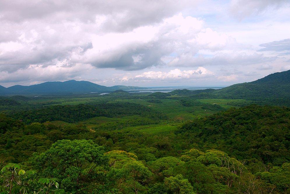 imagem da mata atlântica na Área de Preservação Ambiental de Guaraqueçaba