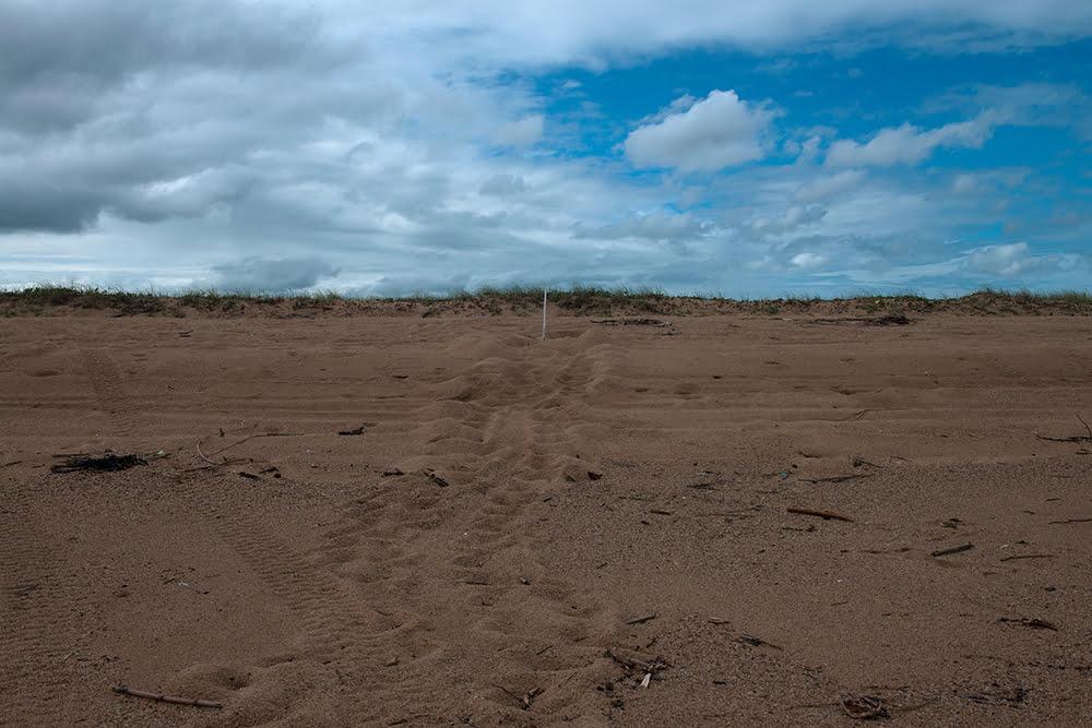 """""""o meio ambiente nunca foi levado a sério no Brasil, imagem dos-rastros de tartarugas na Reserva Biológica dos Comboios"""