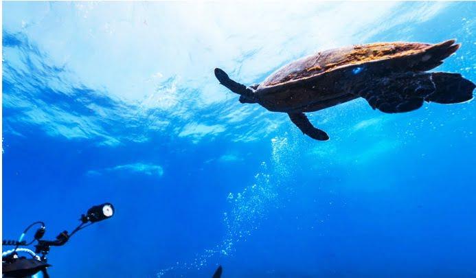 Fundo do mar de Fernando de Noronha, imagem de tartaruga no fundo do mar de noronha