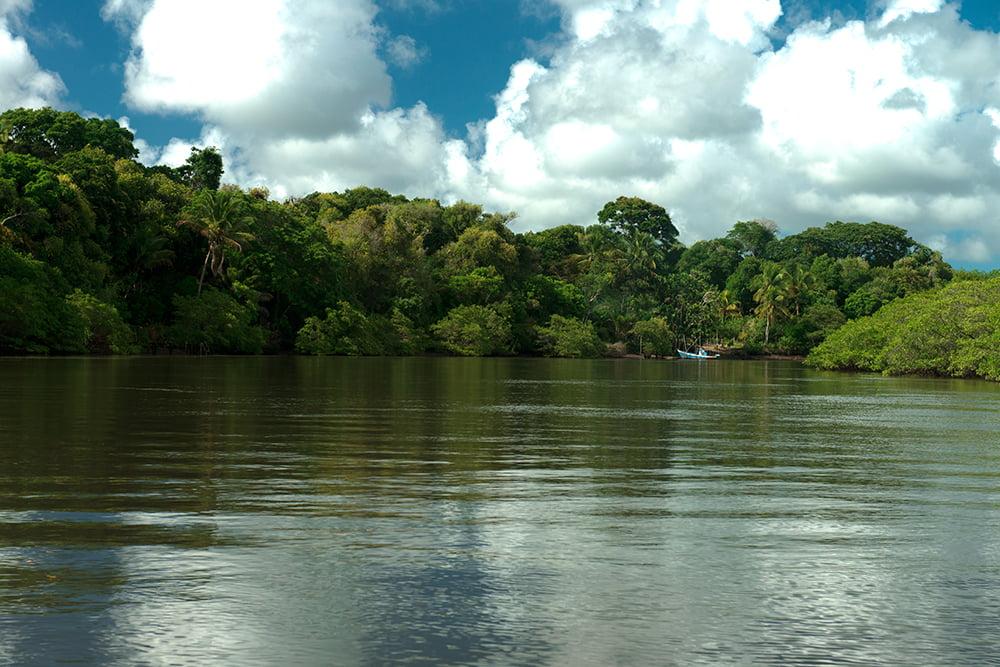 resex cassurubá, imagem de mangue