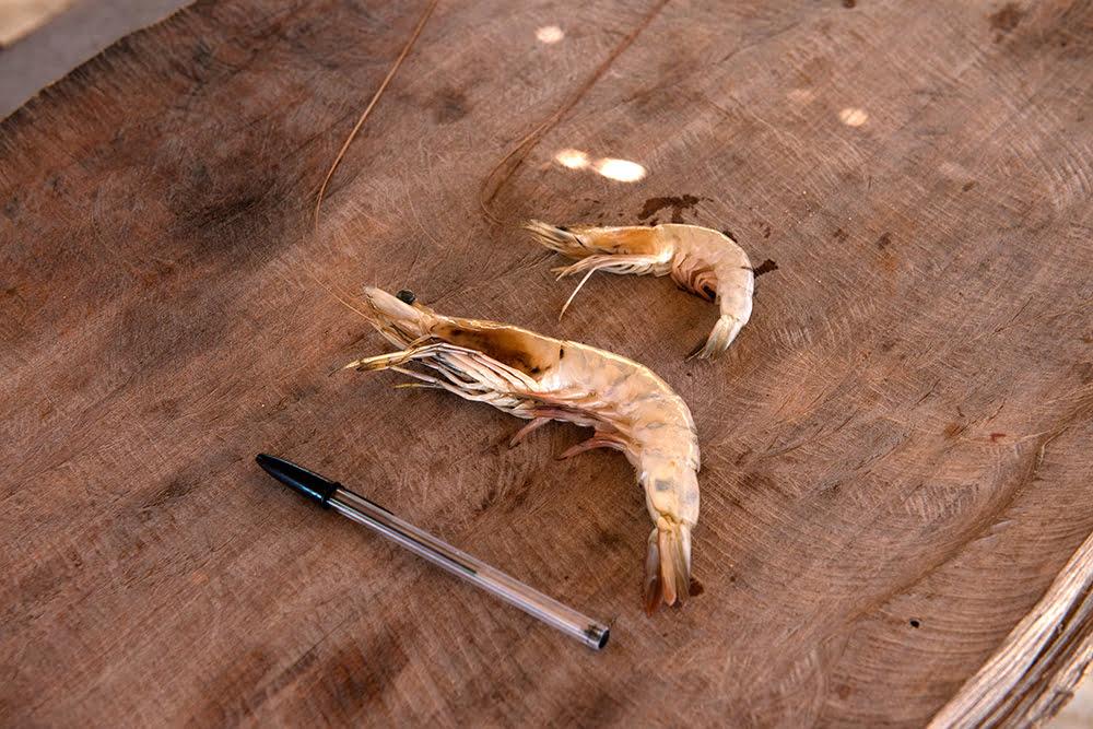 resex cassurubá, imagem de camarões