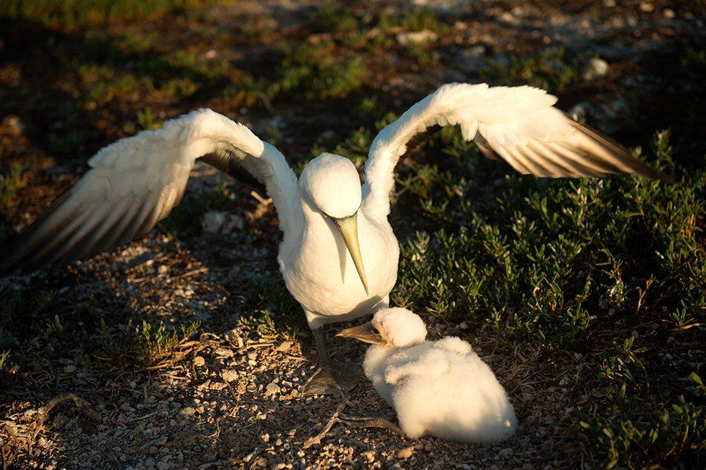 outro-atoba-no Parque Nacional Marinho dos Abrolhos