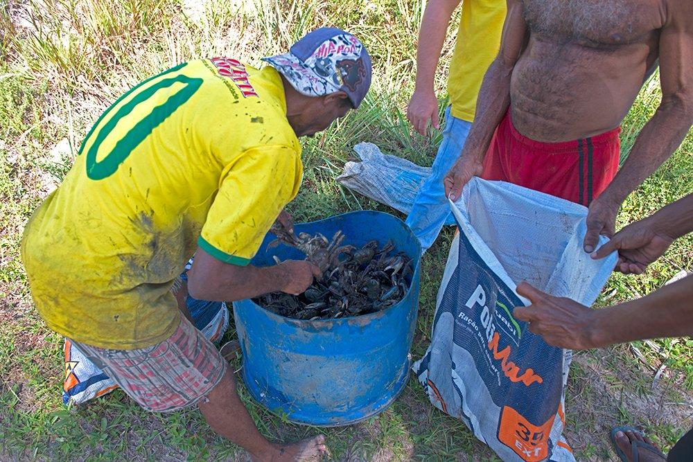 Resex de Canavieiras, image de -caranguejos