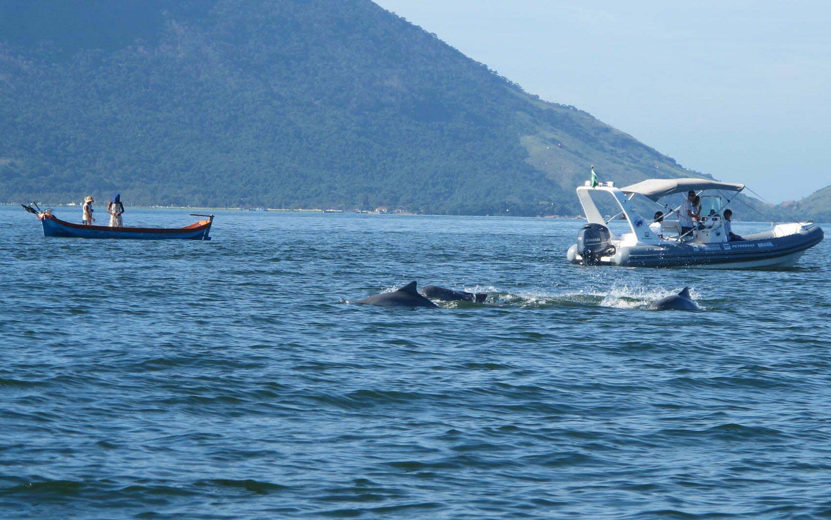 Botos da baía de Guanabara, imagem de botos na baía de guanabara