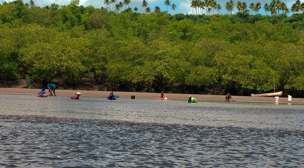 resex acaú goiana, imagem de Marisqueiras em ação