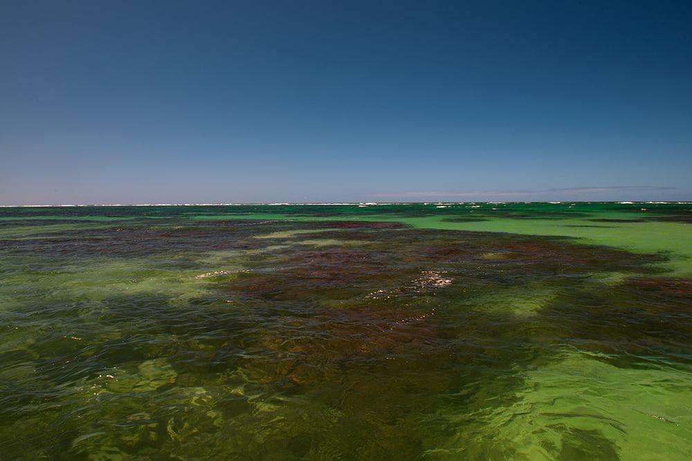 APA Costa dos Corais, imagem de recifes de corais