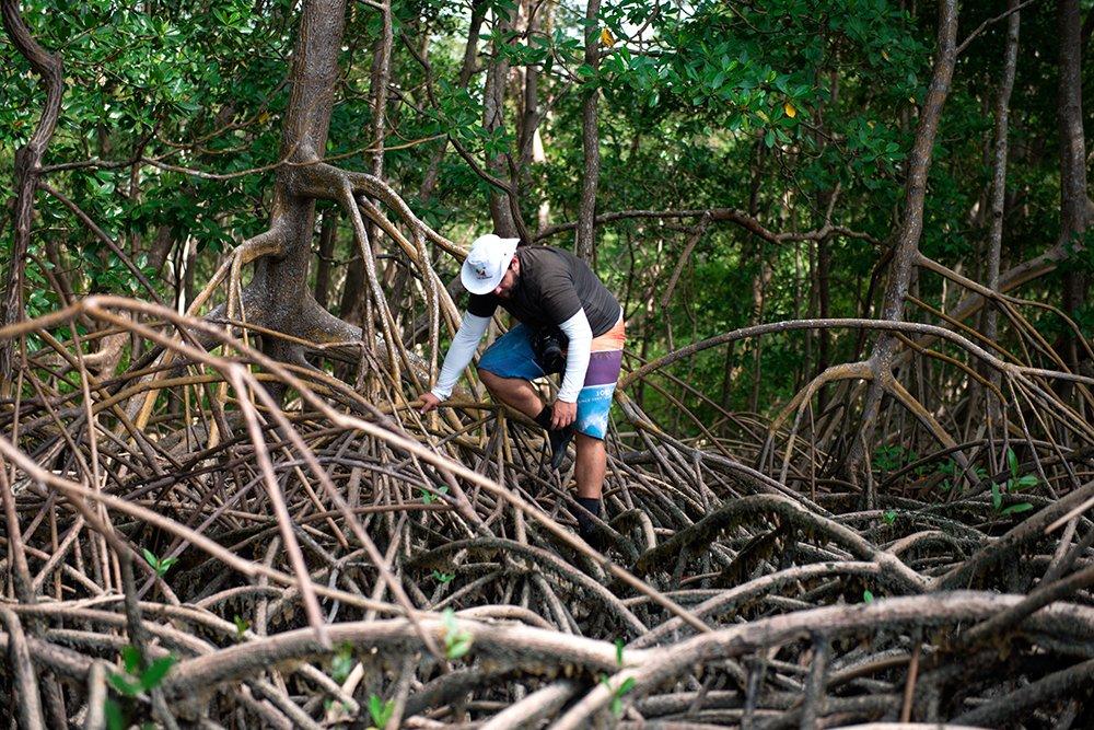 resex mãe grande de curuçá, imagem de mangue